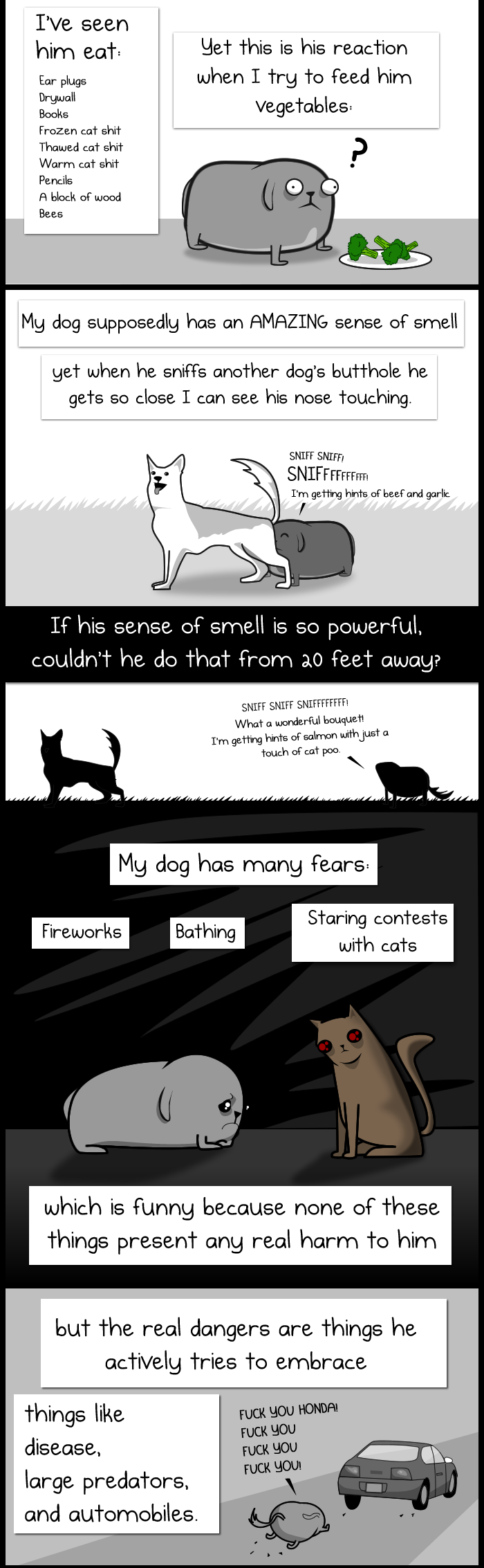 Dog Paradox 5
